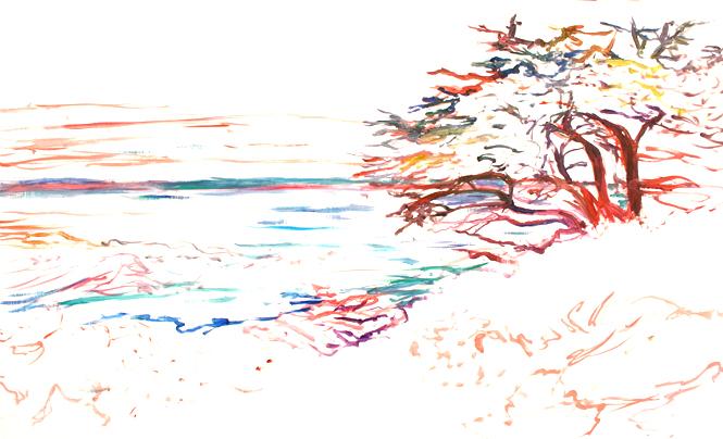 Marie Cameron Monterey Cypress Progress 3 2012