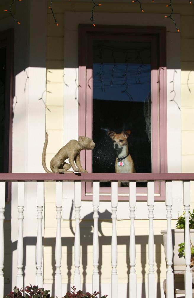 Mummy Cat & Chihuahua - photo by Marie Cameron 2012