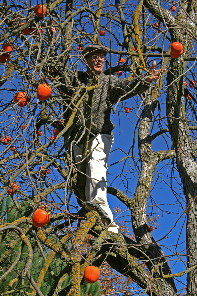 Kevin Kasik Tossing a Persimmon - photo by Marie Cameron - 2012