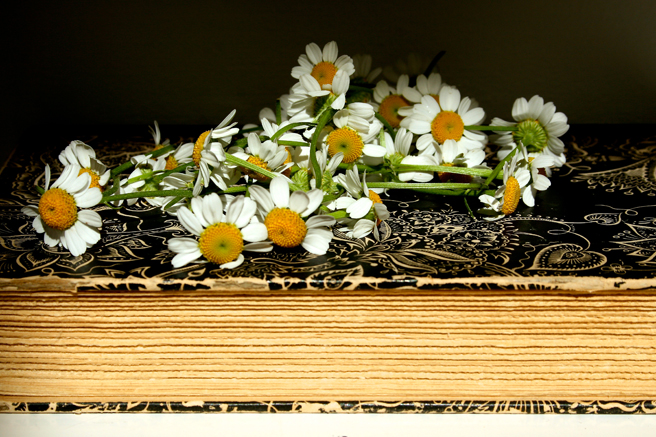 Daisies & Tagore's Fireflies - Marie Cameron 2013