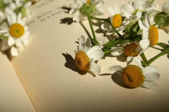 Daisies & the Printed Page - Marie Cameoron 2013