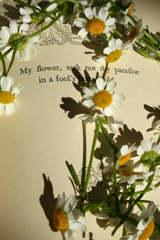 Daisies & Tagore - Marie Cameron 2013