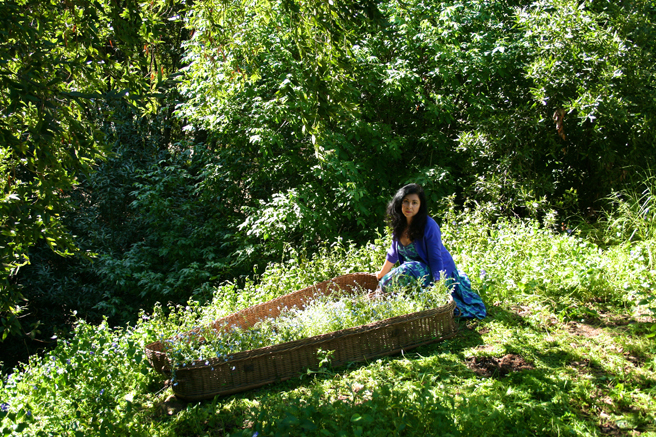 Casket of Forget-me-nots with Marie Cameron by the Ravine 2013