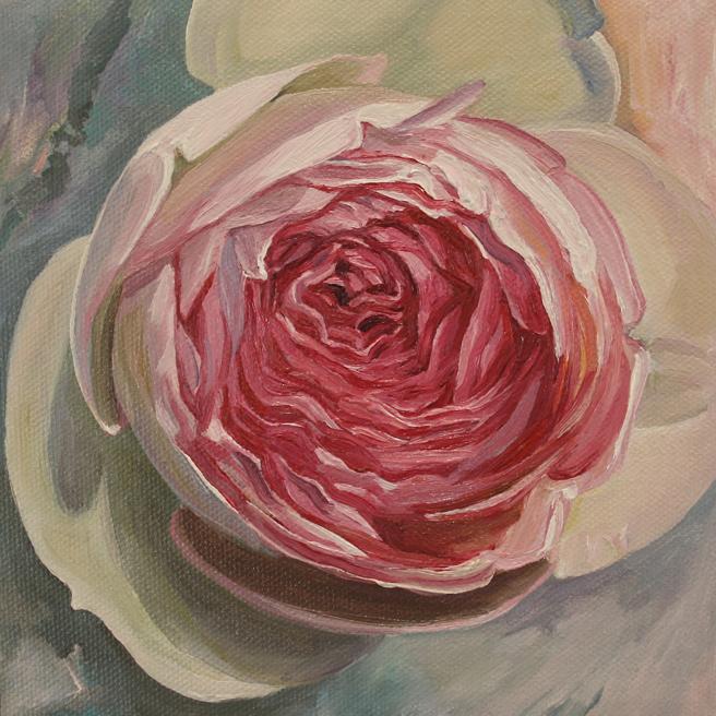 Rose Petals III 2013 oil on canvas 6x6  Marie Cameron