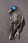 Corpus Corvus Blue Marie Cameron 2013