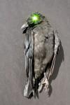 Corpus Corvus Green Marie Cameron 2013