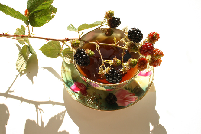 Cup o' Blackberry Brambles photograph by Marie Cameron 2013