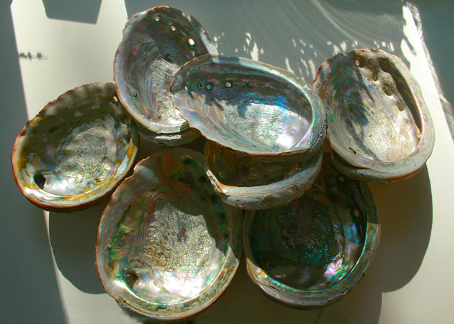 Estate Finds - Abalone Shells Marie Cameorn 2013