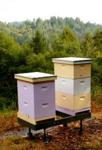 Eco Feast at Love Apple Farm -bee boxes- Marie Cameron 2013