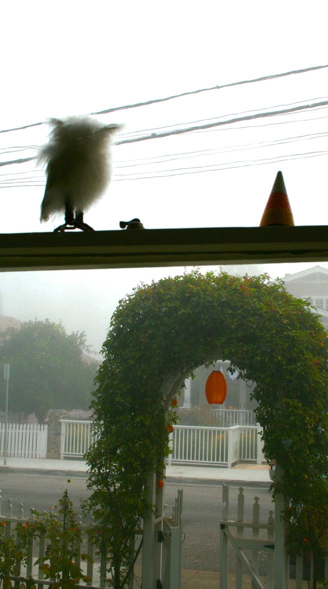 Foggy October Morn - Fuzzy Owl - photo Marie Cameron 2013