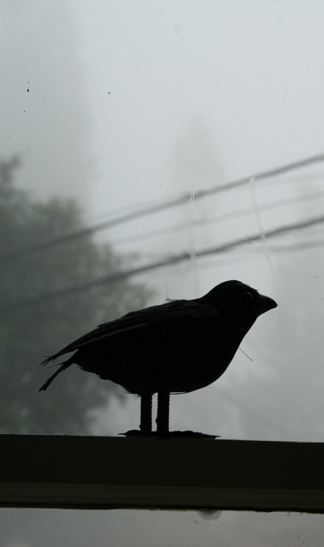 Foggy October Morn - Little Crow- photo Marie Cameron 2013