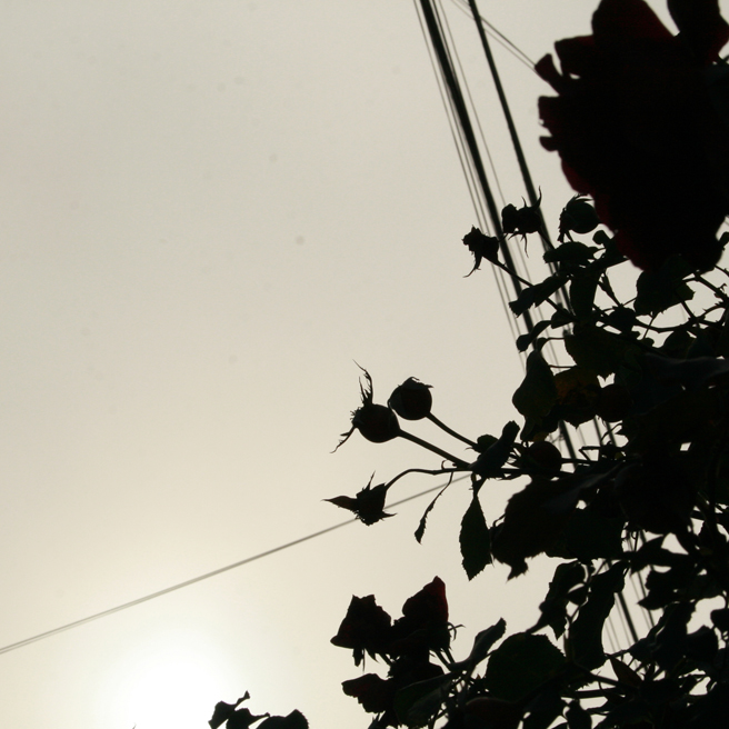 Foggy October Morn - Rose Hips and Wires - photo Marie Cameron 2013