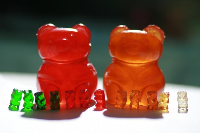Gummi Bear Dicipline - phot Marie Cameron 2013