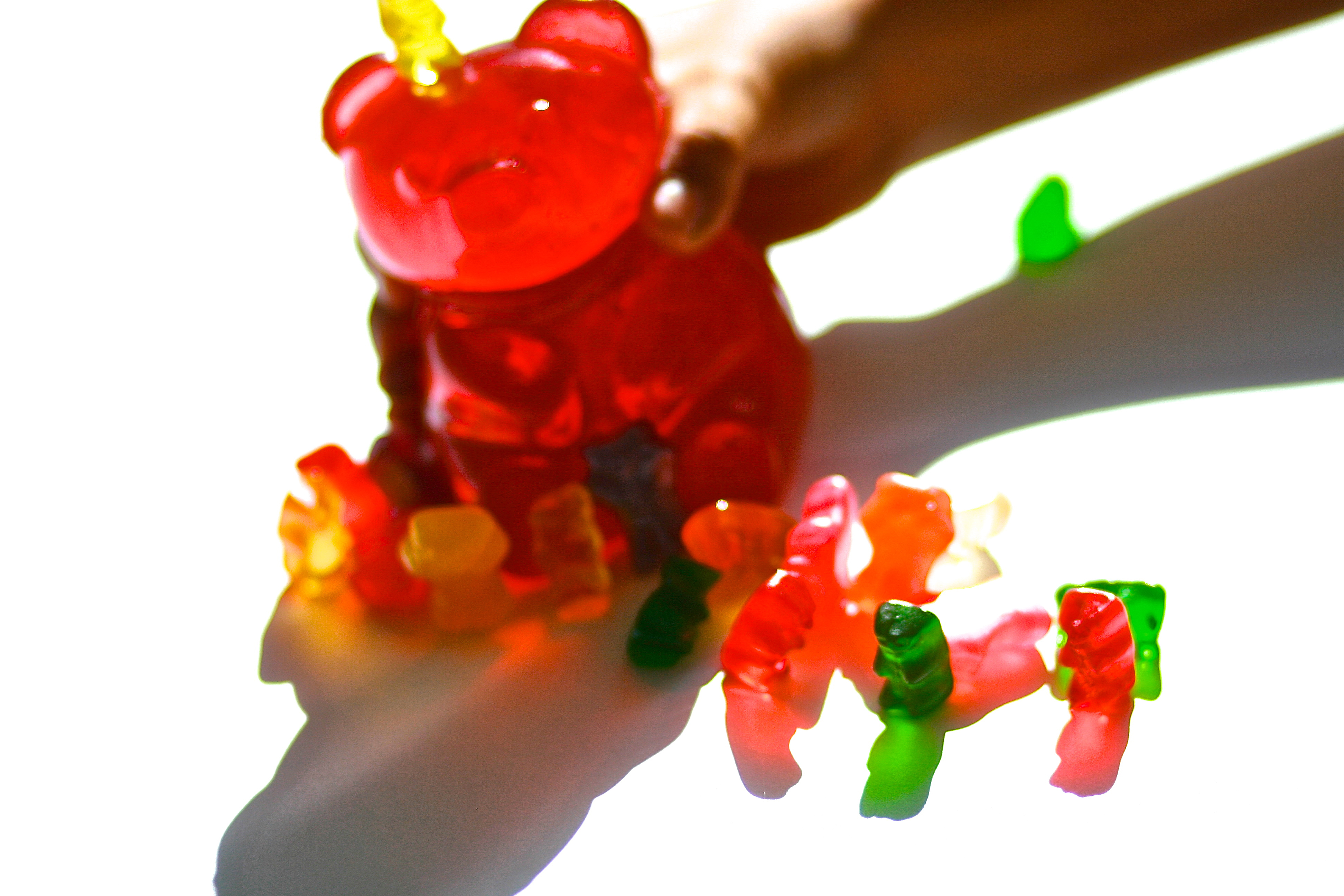 Gummi Bear Grab - photo Marie Cameron 2013