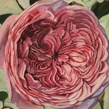 Rose Mandala Marie Cameron 2013 sm