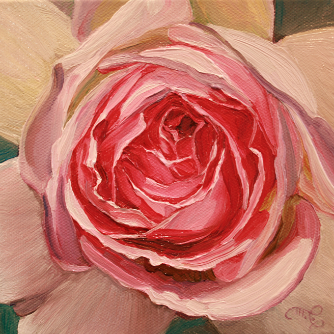 Rose Petals V - Marie Cameron- oil on canvas - 6x6 in - 2013
