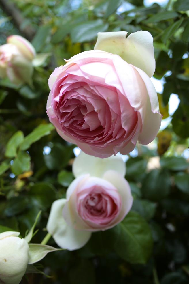 Nilofer's Garden 3 - Marie Cameron 2014