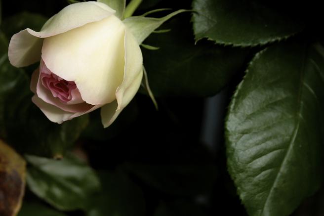 Nilofer's Garden 8 - Marie Cameron 2014