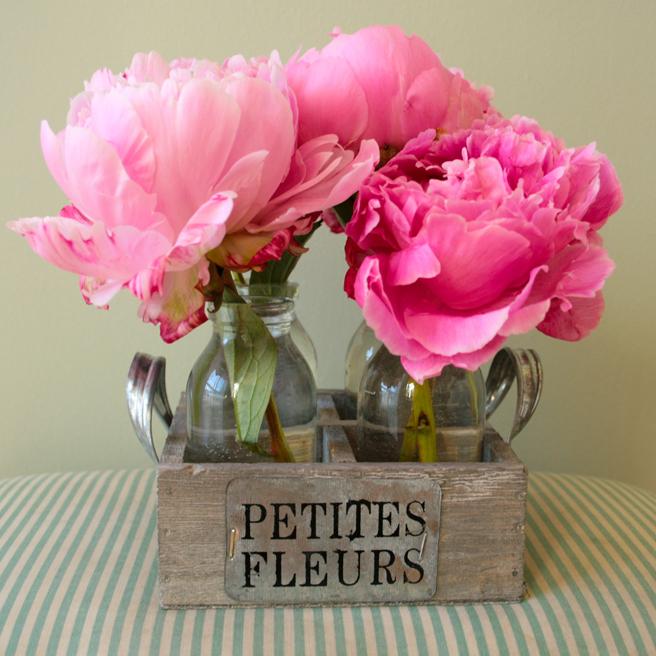 Peonies - Petites Fleurs 2- photo Marie Cameron 2014