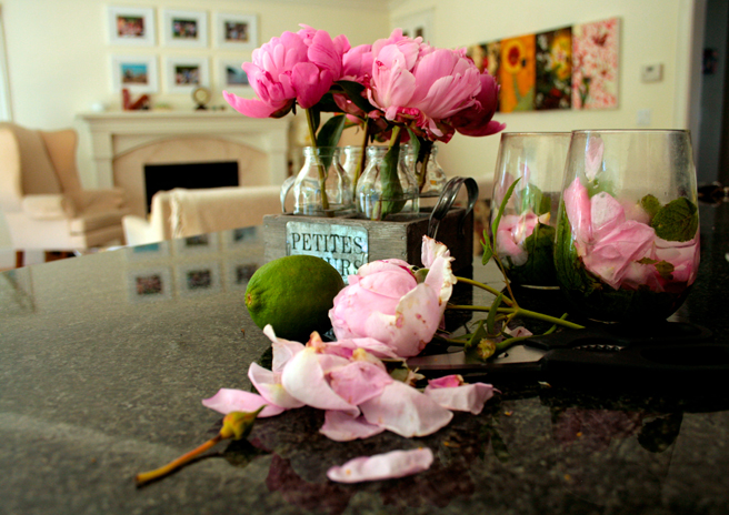 Peonies - Petites Fleurs 5- photo Marie Cameron 2014