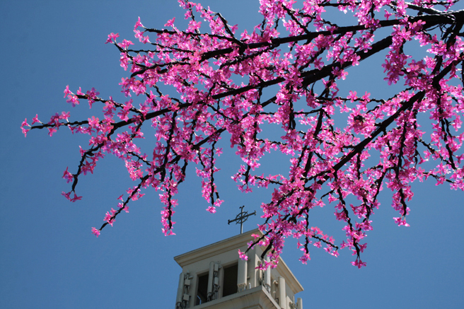 Plastic Cherry Blossoms and Church - photo Marie Cameron 2014