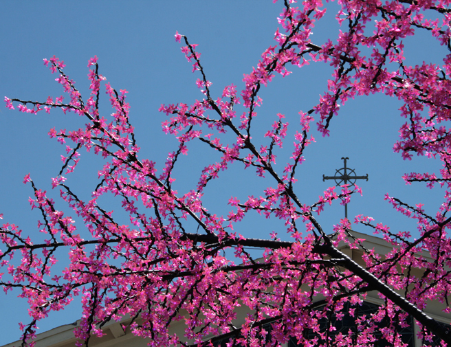 Plastic Cherry Blossoms and Cross - photo Marie Cameron 2014