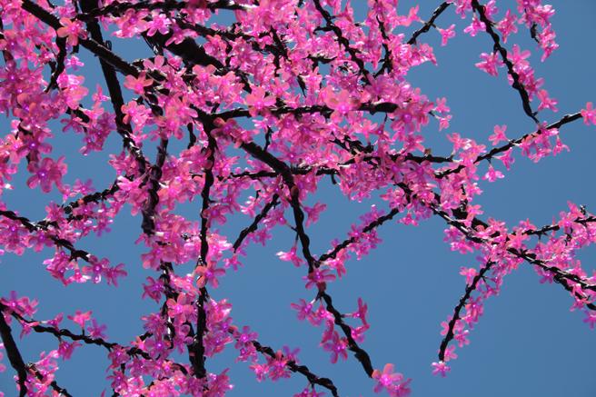 Plastic Cherry Blossoms - photo Marie Cameron 2014