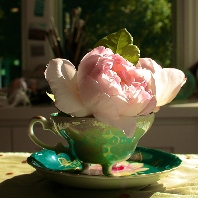 Rose and Teacup - photo Marie Cameron 2014