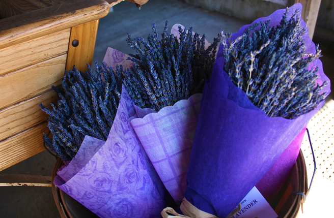 Day-tripping Lavender, Davenport- photo Marie Cameron 2014