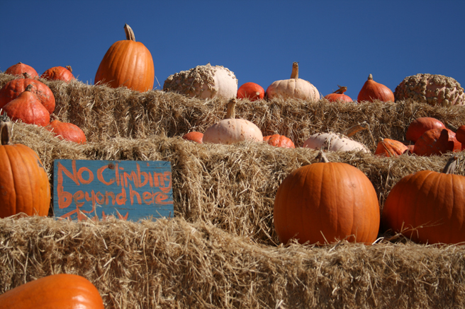 Day-tripping - warning to high climbers - Rodoni farms - photo Marie Cameron 2014