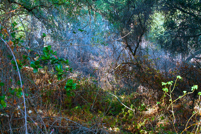 Picchetti - Blue and Emerald Dormant Forrest- photo Marie Cameron 2014