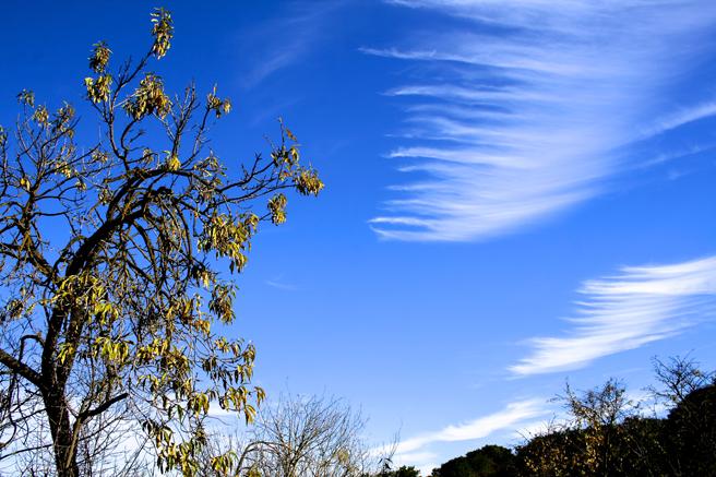 Picchetti Clouds - photo Marie Cameron 2014