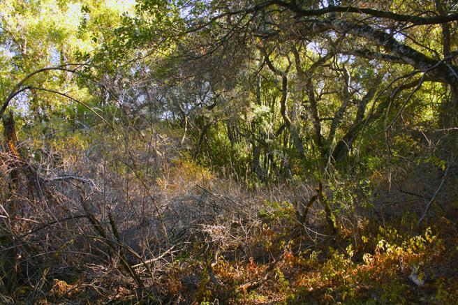 Picchetti Dormant Forrest - photo Marie Cameron 2014