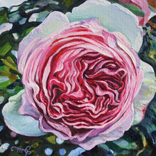 Rose Petals VI - oil 6x6 in Marie Cameron - 2014 web sm