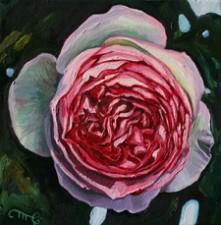 Rose Petals VII - Marie Cameron 2014 oil 6x6 in sm