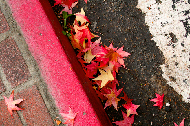 Wet - Curbside photo Marie Cameron 2014