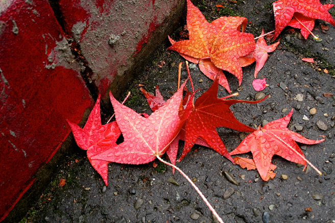 Wet - Red Leaves Curbside photo Marie Cameron 2014