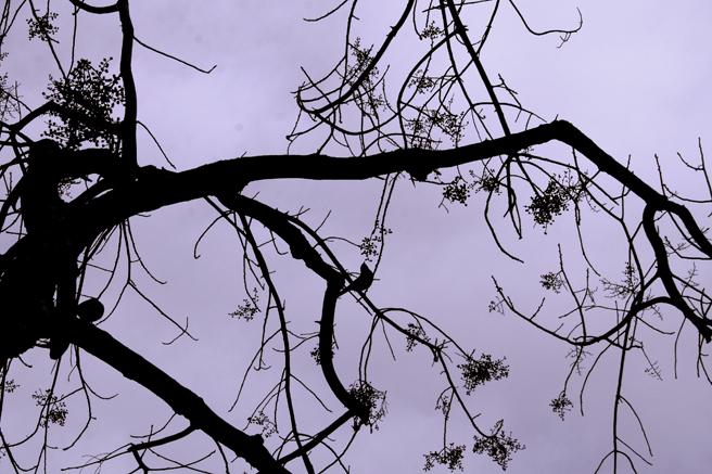 Bluebird Silhouette Lavender - Marie Cameron 2014 2