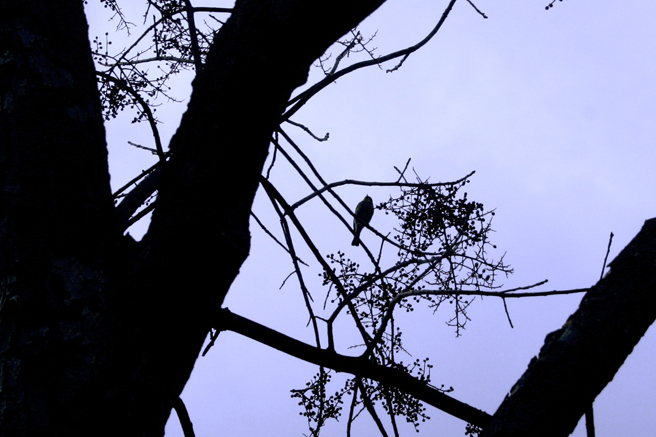 Bluebird Silhouette Lavender - Marie Cameron 2014 3