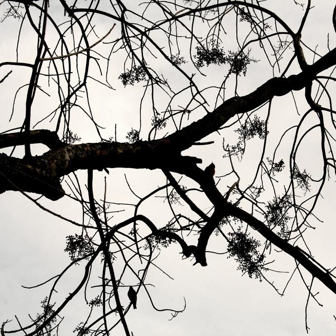 Bluebird Silhouette black on white - Marie Cameron 2014 1