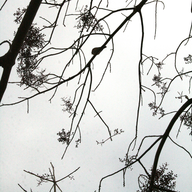 Bluebird Silhouette black on white - Marie Cameron 2014 3
