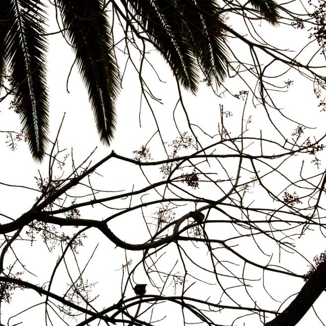 Bluebird Silhouette black on white - Marie Cameron 2014 4