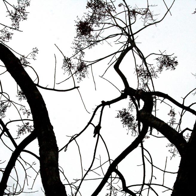 Bluebird Silhouette black on white - Marie Cameron 2014 5