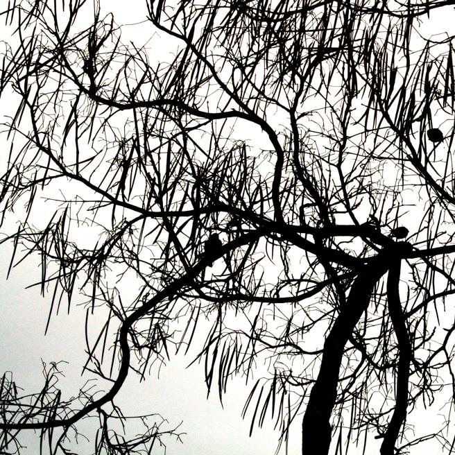 Bluebird Silhouette black on white - Marie Cameron 2014 6