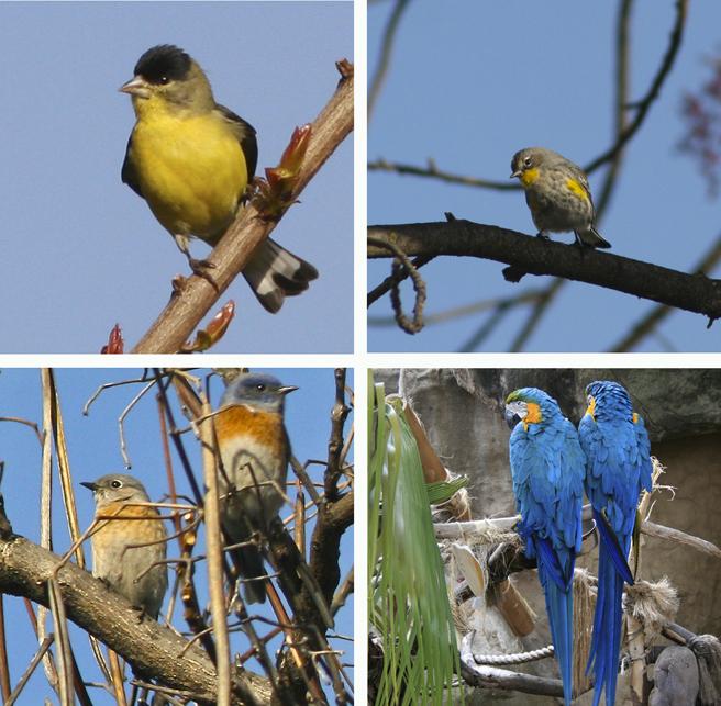 4 birds - Marie Cameron