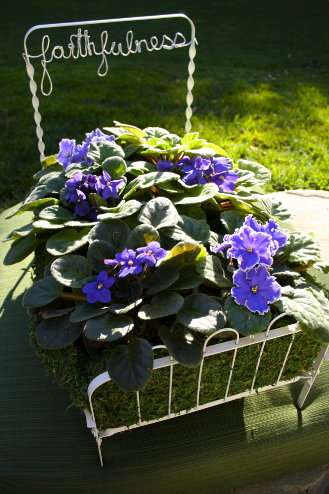 Faithfulness - bed of violets Marie Cameron 2015