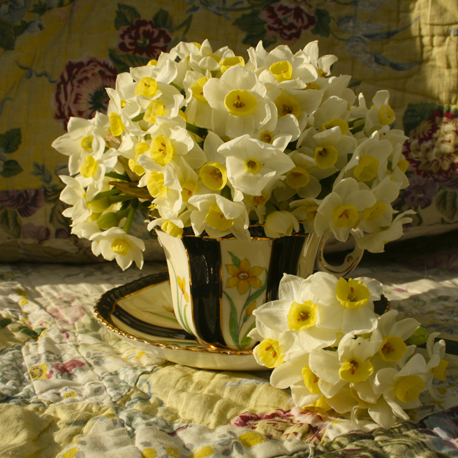 Narcissus Tea Reference 3 Marie Cameron 2015