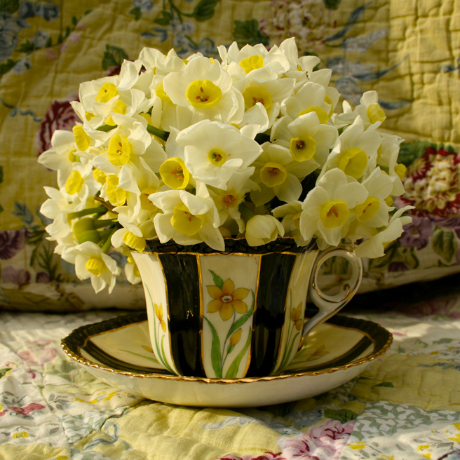 Narcissus Tea Reference 4 Marie Cameron 2015
