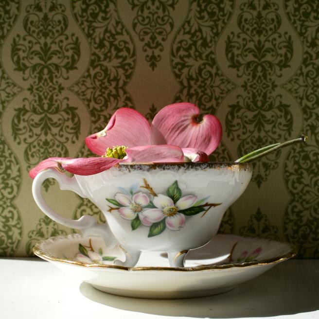 Dogwood Tea Photo 5 - Marie Cameron 2015