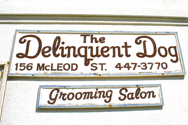 Livermore - The Delinguent Dog - Marie Cameron 2015.jpg
